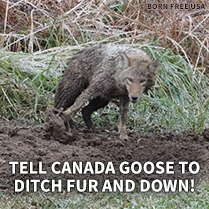 Tell Canada Goose to Ditch Fur and Down