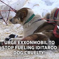 Urge ExxonMobile to Stop Fueling Iditarod Dog Cruelty