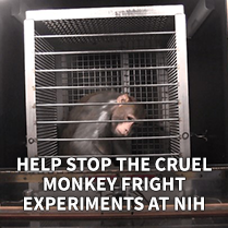 Help Stop the Cruel Monkey Fright Experiments at NIH